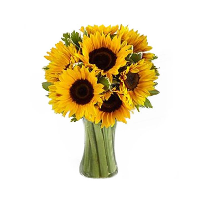 Flores-Girasoles-2255-1.jpg