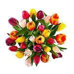 Flores-Tulipanes-1516-1.jpg