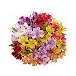 Flores-Alstroemerias-1344-1.jpg