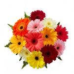 Flores-Gerberas-1512-1.jpg