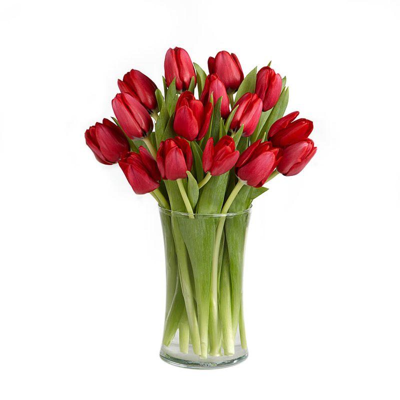 Flores-Tulipanes-2070-1.jpg