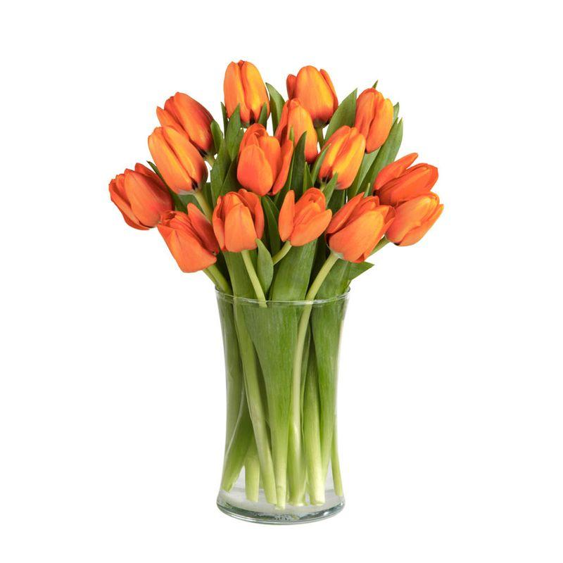 Flores-Tulipanes-2848-1.jpg