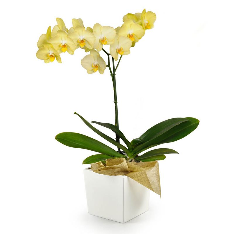 Plantas-Orquideas-6084-1.jpg