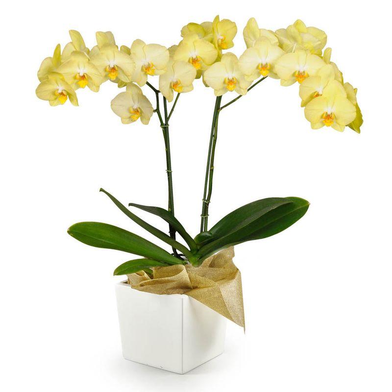 Plantas-Orquideas-6093-1.jpg