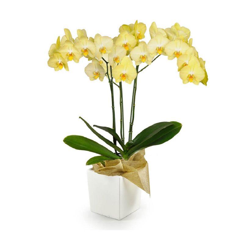 Plantas-Orquideas-6097-1.jpg