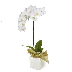 Orquídea 1 Vara pt Blanca