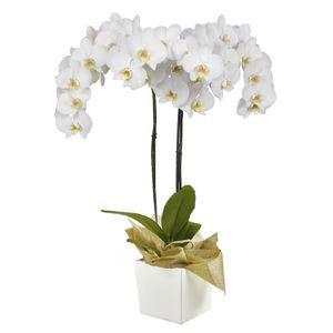 Orquídea 2 Varas pt Blanca