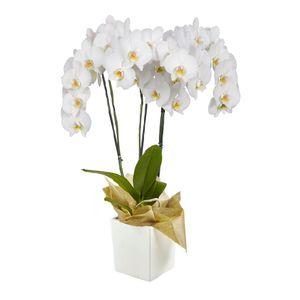 Orquídea 3 Varas pt Blanca
