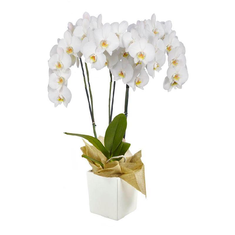 Plantas-Orquideas-6113-1.jpg