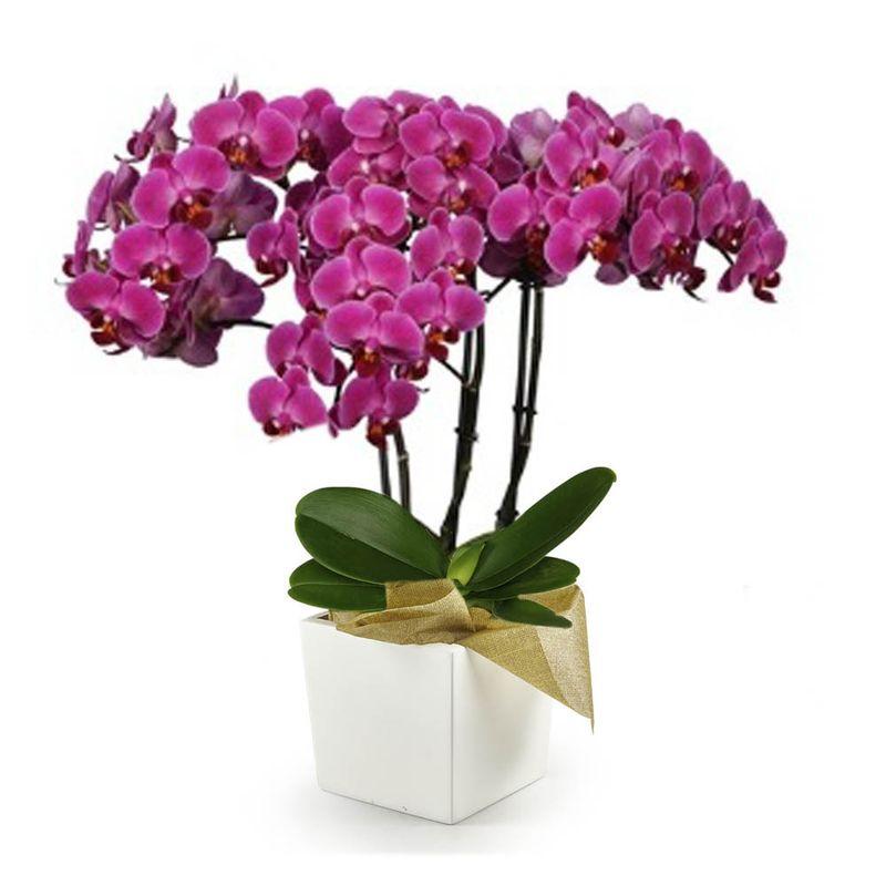 Plantas-Orquideas-6117-1.jpg