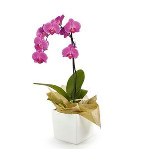 Orquídea 1 Vara pt Morada