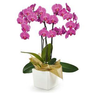 Orquídea 3 Varas pt Morada