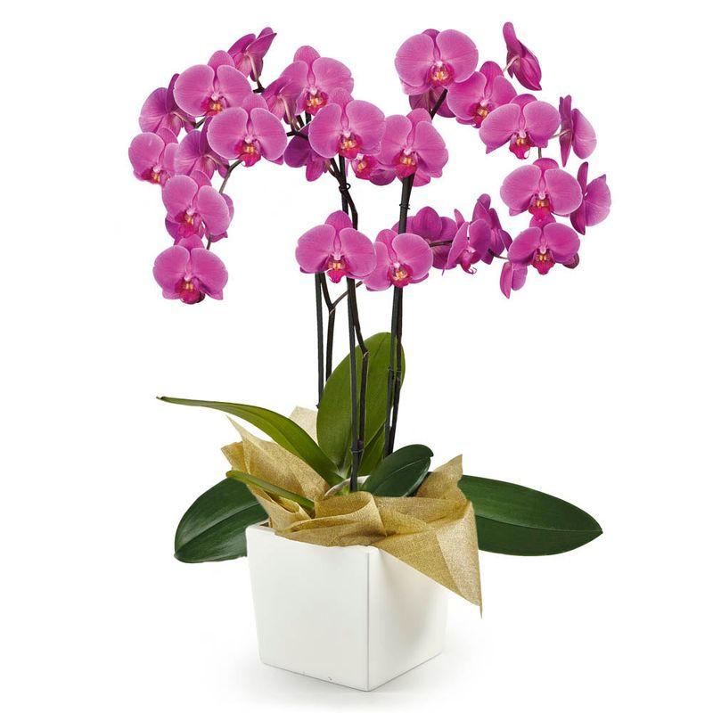 Plantas-Orquideas-6129-1.jpg