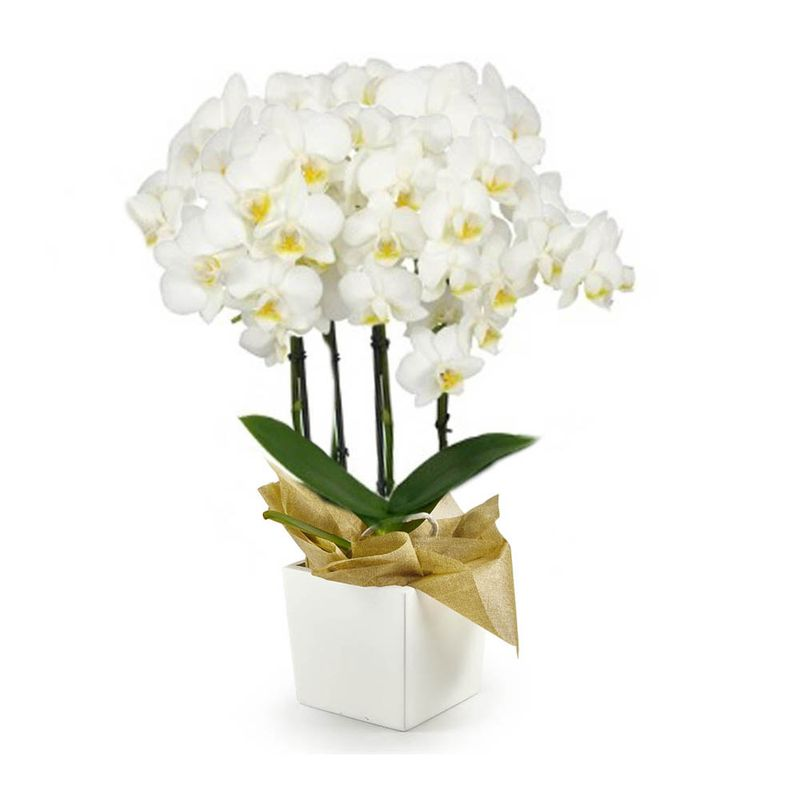 Plantas-Orquideas-6133-1.jpg
