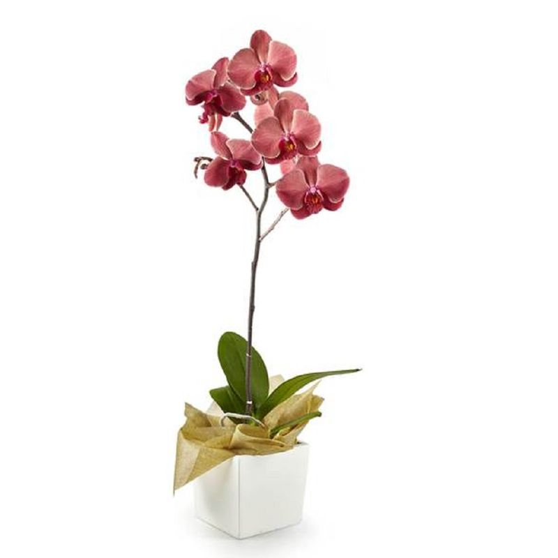 Plantas-Orquideas-6137-1.jpg