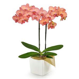 Orquídea 2 Varas pt Naranja