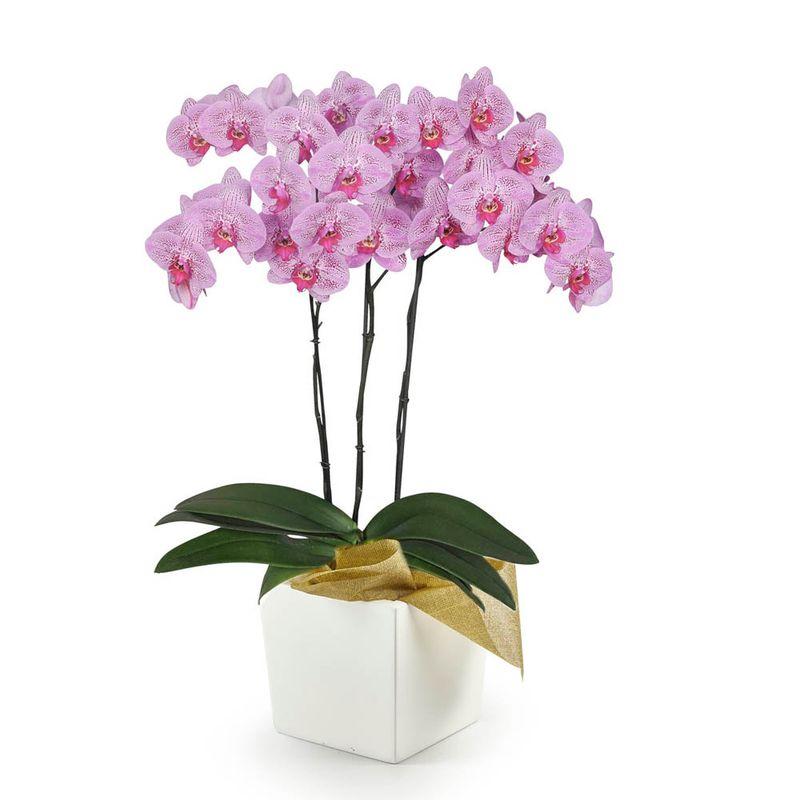 Plantas-Orquideas-6145-1.jpg