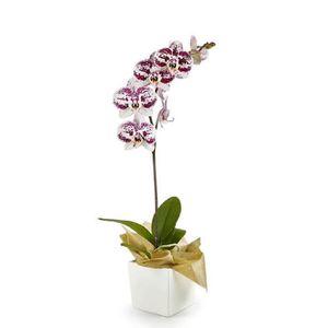Orquídea 1 Vara pt Impresionista