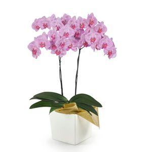 Orquídea 2 Varas pt Impresionista