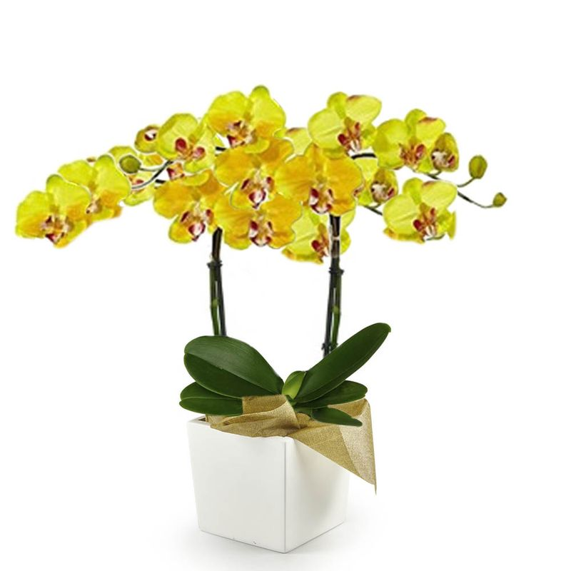 Plantas-Orquideas-6177-1.jpg
