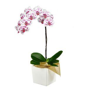 Orquídea 1 Vara pt Bella
