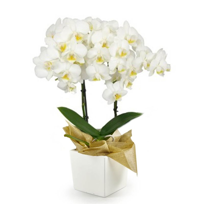 Plantas-Orquideas-6193-1.jpg