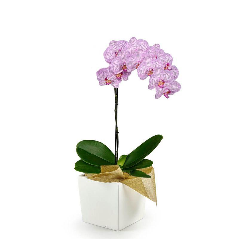 Plantas-Orquideas-6201-1.jpg