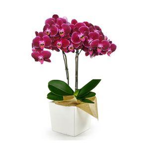 Orquídea 2 Varas Multiflora pt Morada