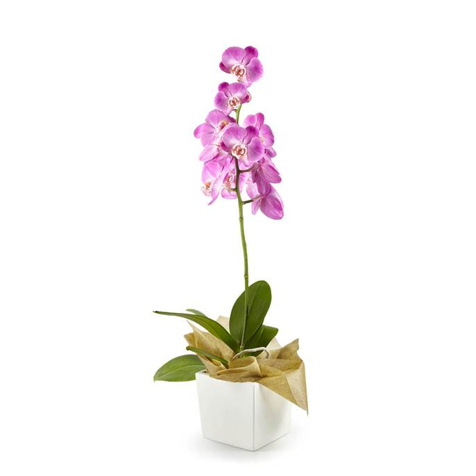Plantas-Orquideas-6217-1.jpg