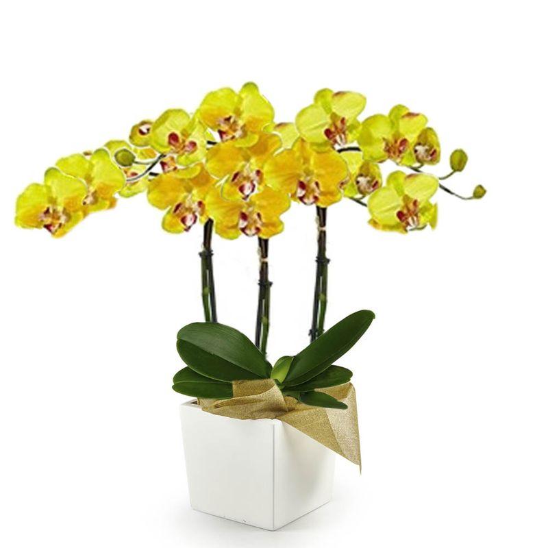Plantas-Orquideas-6225-1.jpg