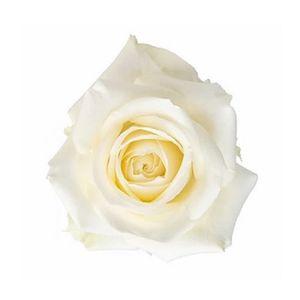 Paquete Rosas Blancas