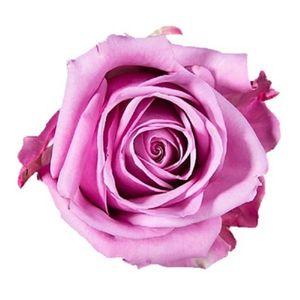 Paquete Rosas Moradas