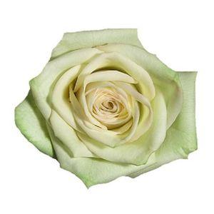 Paquete Rosas Verdes