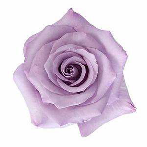 Paquete Rosas Lavanda