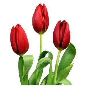 Paquete Tulipanes Rojos