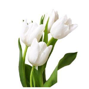Paquete Tulipanes Blancos