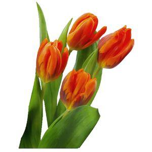 Paquete Tulipanes Naranjas