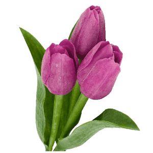 Paquete Tulipanes Morados