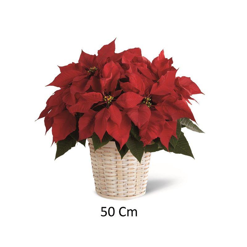 Plantas-Otras-Plantas-6069-1.jpg