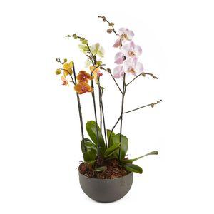 Canasta De Orquídeas