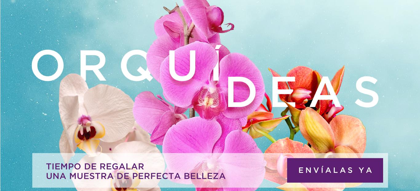 orquideas-phalaenopsis